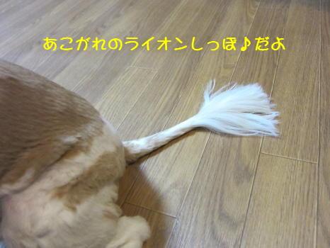 Img_2735_1_2