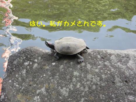 Img_2873_1_2