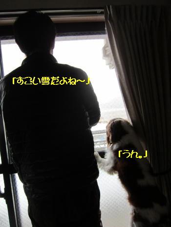 Img_0381_1